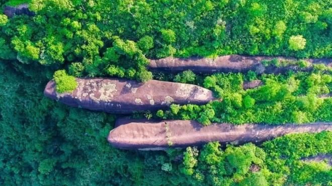 Bất ngờ với cá voi khủng nằm giữa rừng rậm - 1